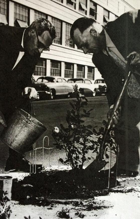 1955-5-8 OJ Rose Festival