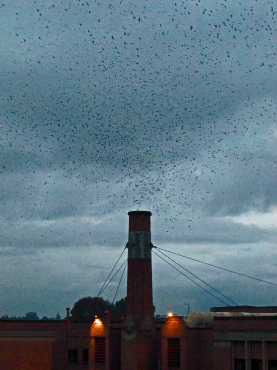 Chapman School Swifts in  September