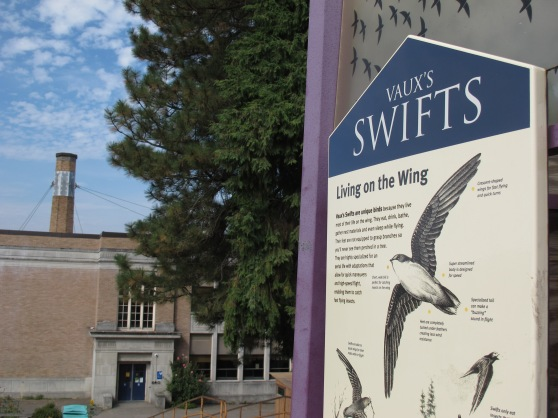 Chapman School Swifts info panel.