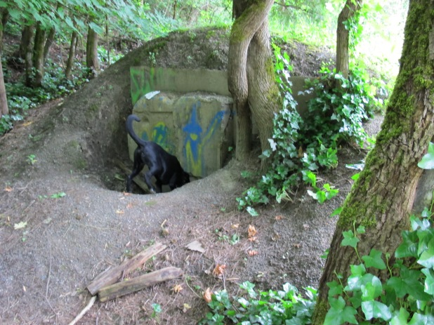 Kelly Butte Bunker, a sealed entry, Willis wanted to dig his way in I think, he's kind of into history.