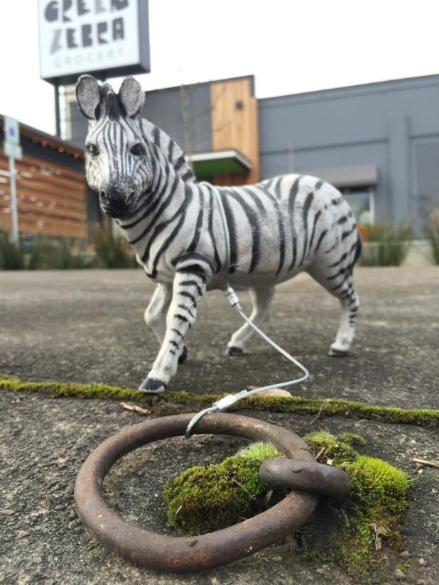 The Green Zebra horse on ring